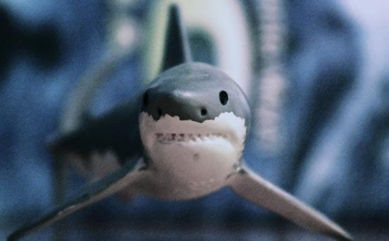 tiburon_mini